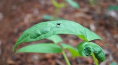 Insect activity in the leaves of vegetables Stock Footage
