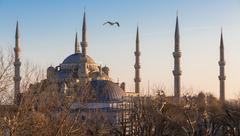 Blue mosque and seagull at sunset, Istanbul, Turkey - stock photo