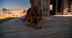 Dog lying on front porch Stock Footage