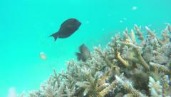 UNDERWATER: Couple of divers snorkeling the reef in Indian ocean Stock Footage