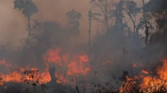 Burning a part of the forest,Tad Lo,Laos Stock Footage