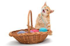 Orange tabby kitten - stock photo