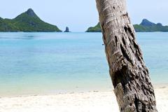 asia kho phangan   tree  rocks in thailand  south - stock photo