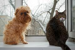 Cat and dog  sitting on the window - stock photo
