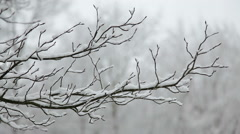 Snow falls in the forest.  Transition Stock Footage