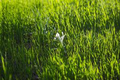 Blossoming white flower Stock Photos