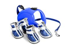 Shoes and a leash for dogs - stock photo