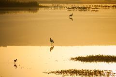Agamon Hula bird refuge - stock photo