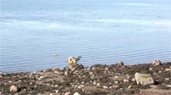 Seaweed covered shoreline with icy water - stock footage