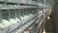 Hundreds of chicken in cages, crane move Stock Footage