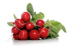 Stock Photo of Studio shot of radish on white background