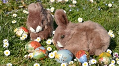 Easter Bunny On Grass With Easter Eggs And Flowers 3 Stock Footage