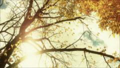 Autumn leaf in tree background Stock Footage