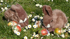Easter Bunny On Grass With Easter Eggs And Flowers Stock Footage