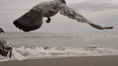 pigeons fly at the seaside - stock footage
