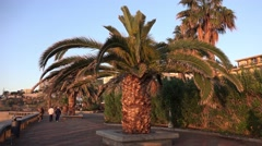 4k Palm tree promenade at Madeira coast and hotel area Stock Footage