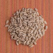 Circle of shelled sunflower seeds - stock photo
