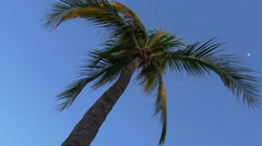 Palm tree fronds waving in strong wind, 4K Stock Footage