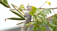 Squirrel is eating plant Stock Footage