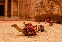Jordan, Petra. Camels near the treasury - stock photo