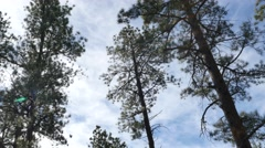 Forest Pan Stock Footage