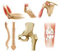 Different human bones - stock illustration