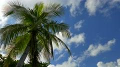 Palm Tree with Blue Sky Stock Footage