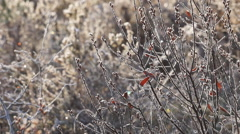 Mid-winter frost, Castle Bottom, Hampshire, UK Stock Footage