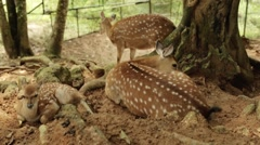 Young deer in the park Stock Footage
