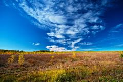 Stock Photo of meadow sky and trees