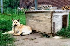 guard dog - stock photo