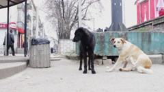 Two stray dogs on the street Stock Footage