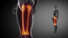Black bones FEMUR animation Stock Footage
