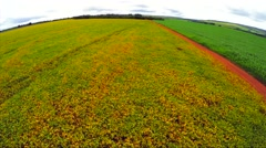 Aerial View from Soybean Plantation in Goias, Brazil Stock Footage