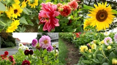 4K montage (compilation) - flowers garden - a busy urban street with cars Stock Footage