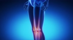 KNEE skeleton x-ray scan in blue Stock Footage
