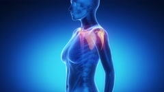 SHOULDER joint skeleton x-ray scan in blue Stock Footage