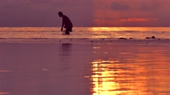 Man harvesting smal shrimps during sunset Stock Footage