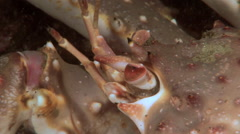 Eyes, spikes and antennae king crab close-up. Stock Footage