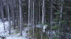 Ascending into the Upper Forest Canopy - stock footage