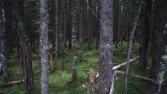 Dark Forest Aerial lateral Stock Footage