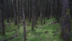 Dark Mossy Forest Forward Flight Low Stock Footage