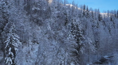 Dark Snowy Forest Trees aerial Stock Footage