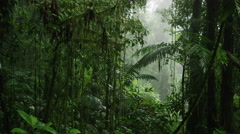 Wide panning shot of dense rain forest / Arenal, Costa Rica Stock Footage