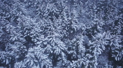 Floating over Dense Winter Forest with Snow and Misty Fog Stock Footage