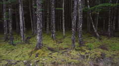 Floating Past Mossy Forest Tree Trunks Aerial Stock Footage