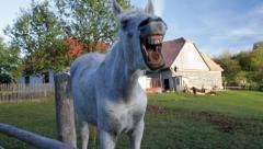 Yawning horse Stock Footage