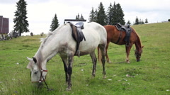 Riding horses grazing, pasture, meadow, mountain, pine trees, ranch Stock Footage