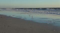 Birds on beach,at magic hour Stock Footage