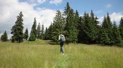 Tourist hiker on a trail, beautiful mountain meadow with pine trees in summer Stock Footage